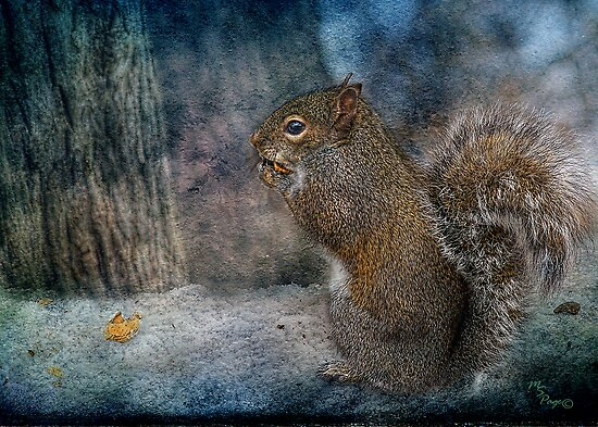 """Twilight Squirrel"" by Melinda Stewart Page"