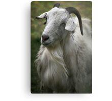 A Friendly Goat Metal Print