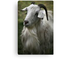 A Friendly Goat Canvas Print