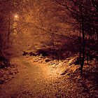 THE DARKSIDE OF THE WOODS by leonie7