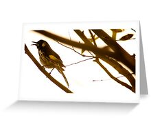 Honey Eater Greeting Card