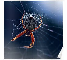 Spider in the grass Poster