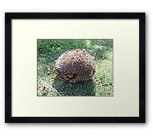 large hedgehog Framed Print