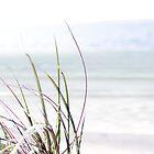 sand dune grass by morrbyte