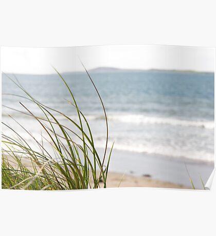 sand dune grass view Poster