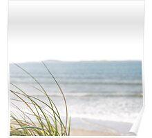 sand dune grasses Poster