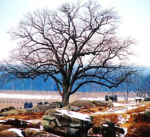 A Tree Stands at Devil's Den by AngieDavies