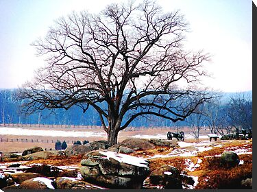 A Tree Stands at Devil&#x27;s Den by AngieDavies