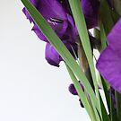 Modern Flowers by Samantha Jones