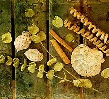Cinnamon Sticks & Sea Shells by Barbara Ingersoll