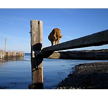 Cat Walk Photographic Print