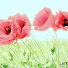 Poppies 2 by aMOONy