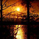 The Lakes Warmth by Dawn di Donato