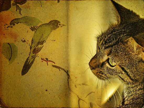 Birdwatching by © Kira Bodensted