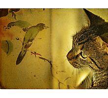 Birdwatching Photographic Print