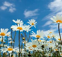 Flowers with Blue sky by Dave McAleavy