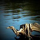 Driftwood Creature by Sharon Woerner