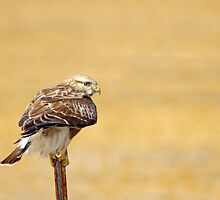 Grasping For Balance by John  De Bord Photography