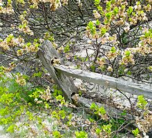 Weathered Fence and Tree - Island Beach State Park by MotherNature