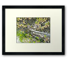 Weathered Fence and Tree - Island Beach State Park Framed Print