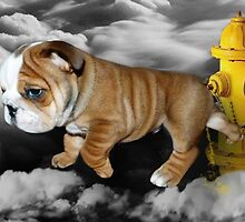 ☀ ツ UP IN THE CLOUDS WHAT DO I SEE A FIRE HYDRANT JUST WAITING FOR ME (SENDING EMAIL)CARD/PICTURE☀ ツ by ✿✿ Bonita ✿✿ ђєℓℓσ