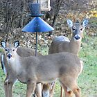Persistent Hungry Female Deer by KevinsView