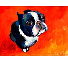 Boston Terrier dog #1 painting Svetlana Novikova Photographic Print