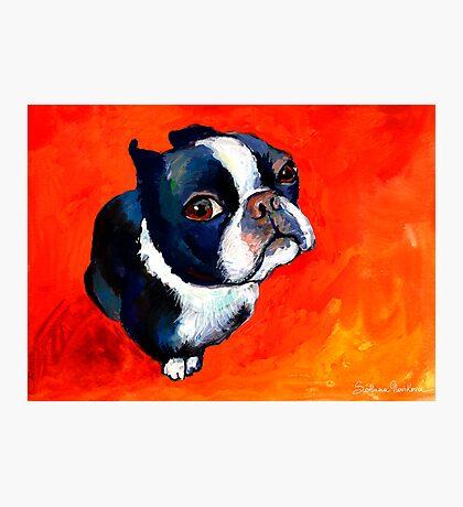 Boston Terrier dog #1 painting Svetlana Novikova Photographic Print
