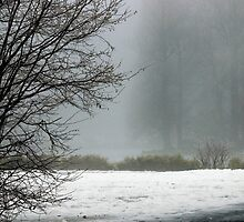 On a flawy, foggy, frozen winter day by kilmann