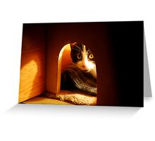 Stray Cat - Trouble - Playing Peek A Boo Before Bedtime Greeting Card