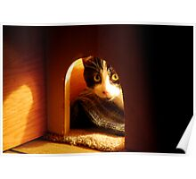 Stray Cat - Trouble - Playing Peek A Boo Before Bedtime Poster