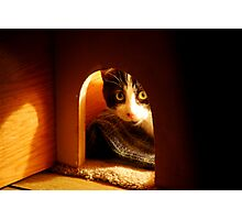 Stray Cat - Trouble - Playing Peek A Boo Before Bedtime Photographic Print