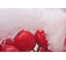 Berries in the Snow, As Is Photographic Print