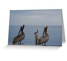 Three brown pelicans Greeting Card