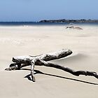 Driftwood by Tainia Finlay