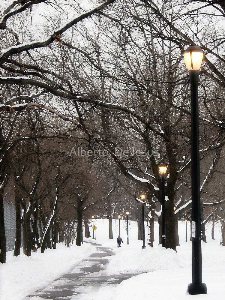 Snowy day in Bronx, New York City  by Alberto  DeJesus
