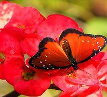 Queen Butterfly by Rosalie Scanlon