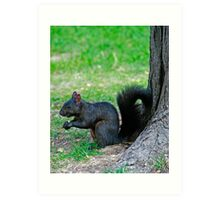 Black Squirrell Art Print