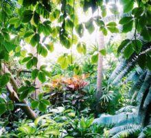 Rain Forest Sticker