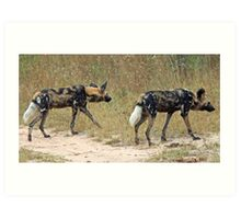 Wild dogs on the hunt Art Print