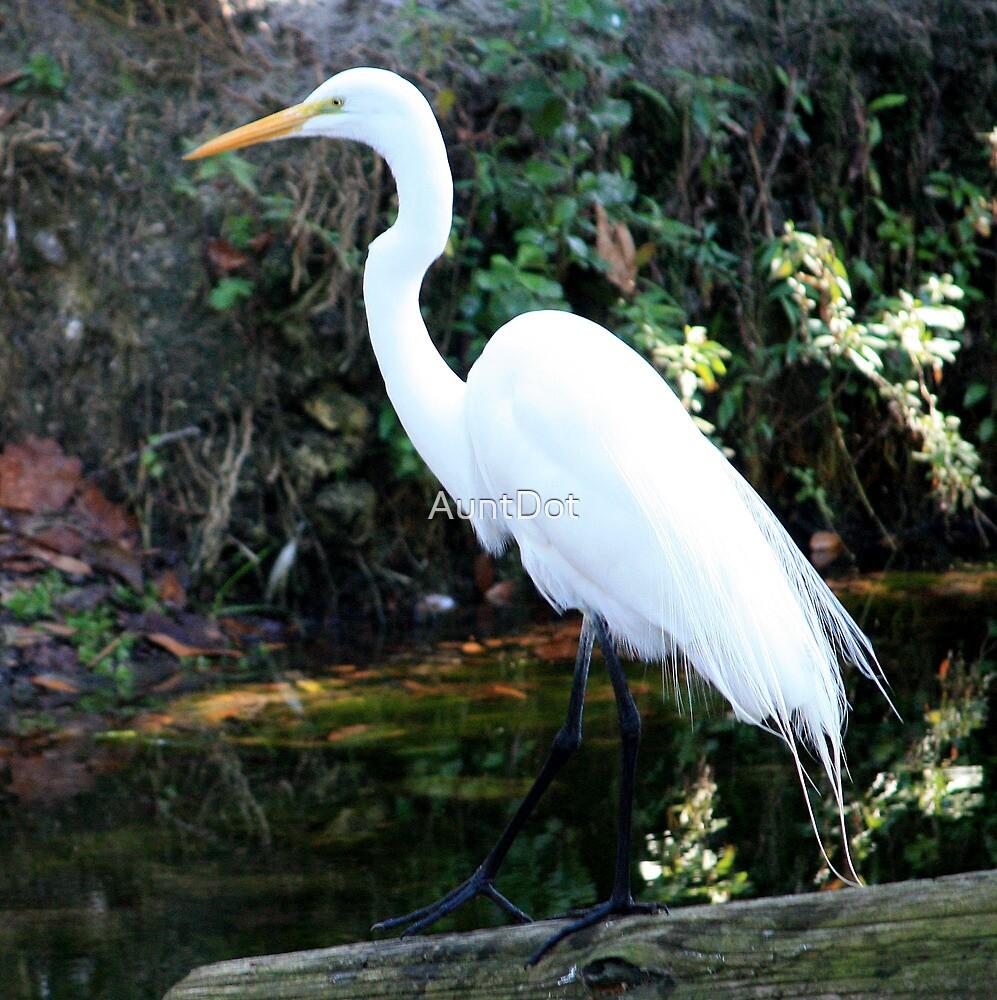 Great Egret  ~ Beauty and Balance by AuntDot