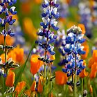 Wild flowers by Kimberly Kay Spies