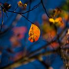 Autumn Leaves by Chris Westinghouse