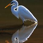 Egret Fishing, Windjana Gorge by Earthboundimage