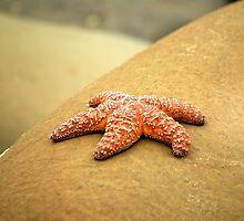 Rock Star by Sheri Bawtinheimer
