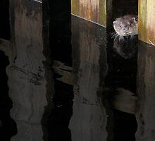 Wild European Otter Cub Under The Pier by memaddock