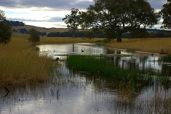 Evening at the billabong by Kerry  Hill