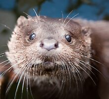 Otter Cub Taking a Look by memaddock
