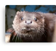 Otter Cub Taking a Look Canvas Print
