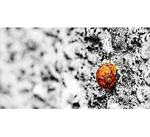 Snail on Render Photographic Print